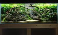 120センチ水槽の近況【ブセ水槽】 - 癒しのアクアライフ