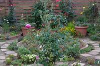 雨を待つ小さなローズガーデンの花たち - 季節の風を追いかけて