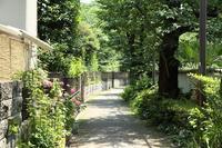 花びらが大きな肥後の花菖蒲と、ガクアジサイが同時に楽しめる庭園(文京区、肥後細川庭園) - 旅プラスの日記
