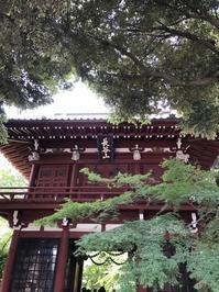本土寺の花菖蒲と紫陽花 - おはけねこ 外国探訪