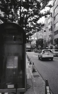 ひっそりと... - 心のカメラ / more tomorrow than today ...