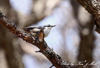 二日目の鳥さん達♪ - ケンケン&ミントの鳥撮りLifeⅡ