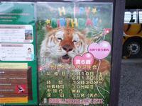 2017.6.10-11<合併号> 岩手サファリパーク☆トラのボルタくんお誕生日会!【Golden tiger】 - 青空に浮かぶ月を眺めながら
