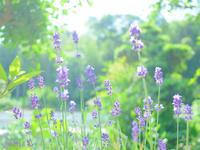 小さな花びら。 - Yuruyuru Photograph