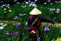 花摘み娘 - Slow Life36