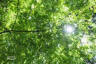 Renewable energy - 続 いまともフォト通信
