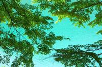 三湖物語'17 初夏#3 - 但馬・写真日和