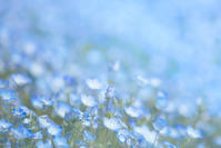 ネモフィラ(PhotoShop ) - 光 塗人 の デジタル フォト グラフィック アート (DIGITAL PHOTOGRAPHIC ARTWORKS)