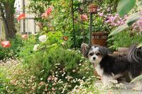 6月の庭で - FUNKY'S BLUE SKY