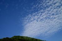 畦刈と山椒の実、十姓生活・・・オクヤマのホタルは、7月 - 朽木小川より 「itiのデジカメ日記」 高島市の奥山・針畑郷からフォトエッセイ