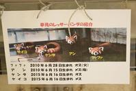 もふてく☆ゴールデンパン祭り2017夢見ヶ崎編・その3 - レッサーパンダ☆もふてく放浪記