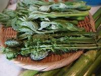山菜料理のご馳走 - 北緯44度の雑記帳