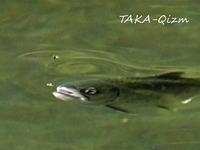 Target - TAKA-Qizm