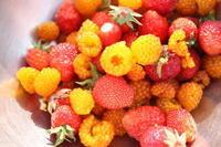 野イチゴ摘み - Ladybug