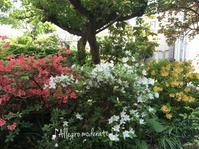 6月の庭 - ♪Allegro moderato♪~穏やかに早く~