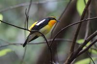 子育ての季節 - 野鳥写真日記 自分用アーカイブズ