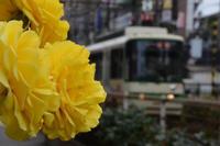 都電荒川線のバラは終わっていた - kenのデジカメライフ