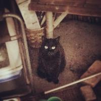 患者を支える家族 - いぬ猫フェレット&人間
