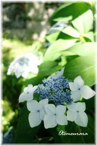 お城跡の紫陽花 1 - 日々楽しく ♪mon bonheur