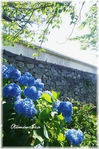 お城跡の紫陽花 2 - 日々楽しく ♪mon bonheur