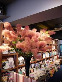 今週の「WORLD BOOK CAFE」さんは、「スモークツリー」。2017/06/10。 - 札幌 花屋 meLL flowers