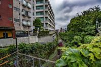記憶の残像 2017年 花の東京 -12 豊島区 雑司ヶ谷付近 - ある日ある時 拡大版