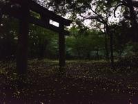 儚い光 ② - 休日登山日記