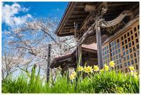 会津で見つけた、春だねえ。 - 日々是好日 Here comes the sun.