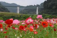 山陰放送ラジオ あさスタ ひろがる料理  - 料理研究家ブログ行長万里  日本全国 美味しい話