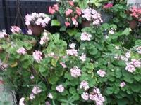 初夏の庭 - カルトナージュと気まぐれ日記