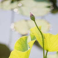 6月12日 - 蓮華寺池の隣5