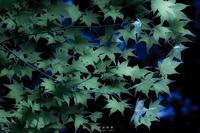 第756回  Imaging - 湘南群青 -The sunset  blue -