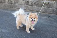 散歩 - FUJIFILM Xシリーズで撮るフォトブログ