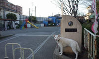 Vol.1194 尻手公園 - 小太郎の白っぽい世界