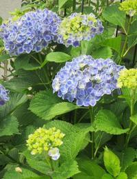 うちの庭 - ひだまりの庭 ~ヒネモスノタリ~