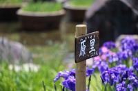 菖蒲園の花たち 原里(ハラサト)です。 - 平凡な日々の中で
