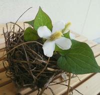 花と鳥の巣と庭仕事… - 侘助つれづれ