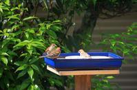 今日の鳥餌台 - ぶん屋の抽斗