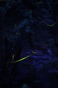 Fireflies - 月に叢雲 花に嵐