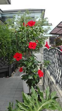 咲いてま〜す - 五十路を過ぎてブログに挑戦
