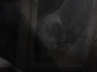 ボス現る - 愛犬家の猫日記