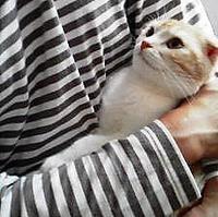 大好き同士 - 猫の小路