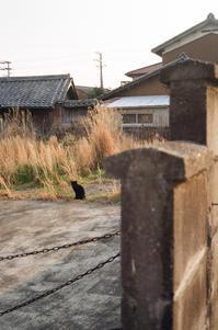 黒猫、3月 - アワジシマイッシュウ(某島民)