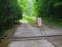 花と山野草/醍醐林道(5月)-2 - 東京八王子UTR不動産の八王子見て歩記