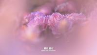 薔薇の残り香 VOL.05 - 君に届け