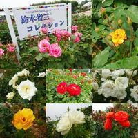 バラ園 - NATURALLY