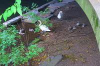白鳥の巣-18 - 料理下手妻と食いしん坊旦那のフランス留学