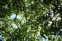 新緑の頃の北鎌倉☆彡 - 僕の足跡