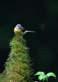 遠征 3 - 今日も鳥撮り
