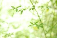 ハイキーであそんだ花フェスタ記念公園 1 - mypotteaセンチメンタルな日々  with photos 2